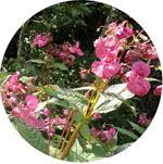 Rid pesky weeds from KennedaleRavine